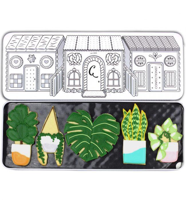 indoor plant biscuit set in tin